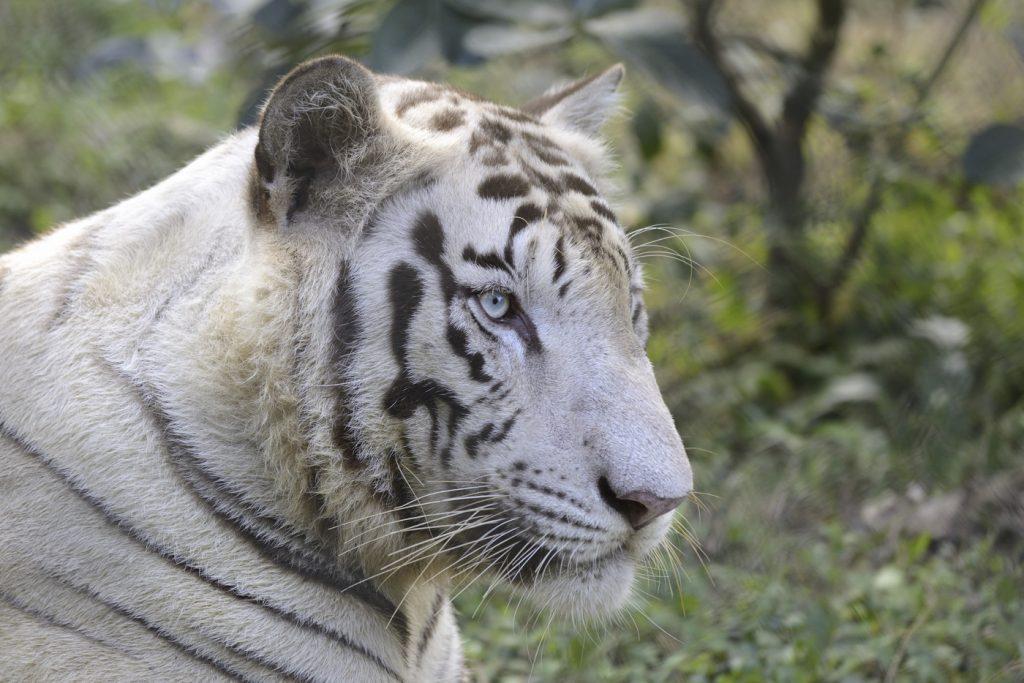 scădere în greutate tigru violet Pierdere în greutate de 40 de kilograme în 4 luni